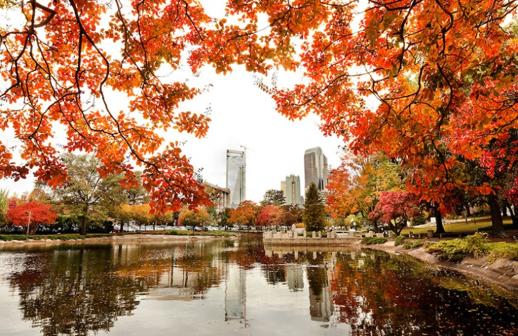 Colorful autumn leaves in downtown / uptown Charlotte North Carolina in fall 2009